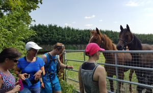 Runners saying hello to two horses