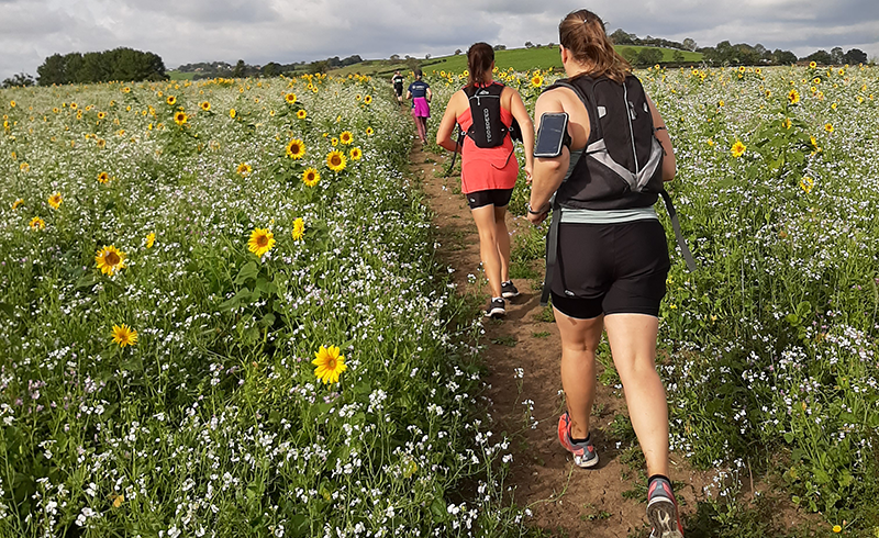 A group of running through a field with sunflowers